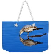 Juvenile Ring-billed Gull  Weekender Tote Bag