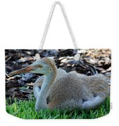 Juvenile Sandhill Crane At Rest Weekender Tote Bag