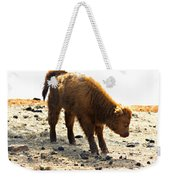 Juvenile Scottish Highlander Cattle Weekender Tote Bag