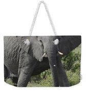 Kenya Masai Mara Charging Elephant  Weekender Tote Bag