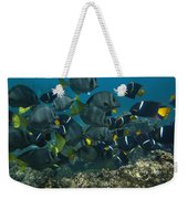 King Angelfish Holacanthus Passer Weekender Tote Bag by Pete Oxford