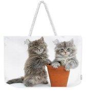 Kittens In Pot Weekender Tote Bag