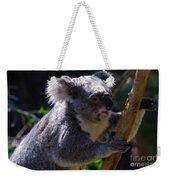 Koala In A Gum Tree Weekender Tote Bag