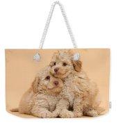 Labradoodle Puppies Weekender Tote Bag