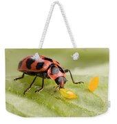 Lady Beetle Eats Potato Beetle Eggs Weekender Tote Bag