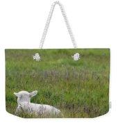 Lamb In Pasture, Alberta, Canada Weekender Tote Bag