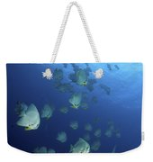 Large School Of Batfish, Christmas Weekender Tote Bag