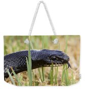 Large Whipsnake Coluber Jugularis Weekender Tote Bag