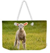 Larry Lamb And His Lovely Pink Ears. Weekender Tote Bag