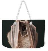 Leaf-nosed Bat Phyllostomidae, Amazon Weekender Tote Bag