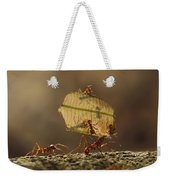 Leafcutter Ant Atta Sp Group Carrying Weekender Tote Bag