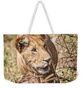 Lioness Hiding Weekender Tote Bag