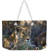 Lioness With Pride In Shade Weekender Tote Bag
