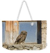 Little Owl Athene Noctua On Window Weekender Tote Bag