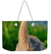 Little Sandhill Cranes Weekender Tote Bag