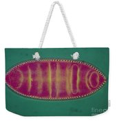 Lm Of An Alga, Surirela Sp Weekender Tote Bag by Eric Grave