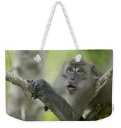 Long-tailed Macaque Macaca Fascicularis Weekender Tote Bag