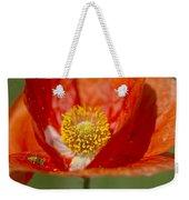 Longhorned Grasshopper Nymph On Orange Poppy Weekender Tote Bag
