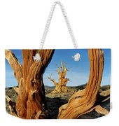 Looking Through A Bristlecone Pine Weekender Tote Bag