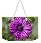 Lovely African Daisy - Osteospermum Weekender Tote Bag