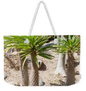 Madagascar Palms Weekender Tote Bag