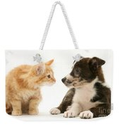 Maine Coon Kitten And Mongrel Dog Weekender Tote Bag