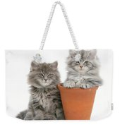 Maine Coon Kitttens Weekender Tote Bag