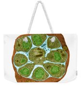 Malaria Parasite In Blood Cell, Tem Weekender Tote Bag