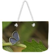 Male Eastern Tailed Blue Butterfly 3063 Weekender Tote Bag