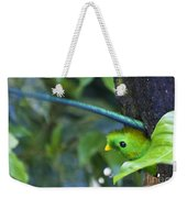 Male Quetzal Working On Nest Hole Weekender Tote Bag
