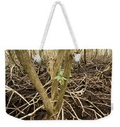 Mangrove Forest With Red Mangrove Weekender Tote Bag