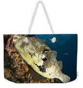 Map Pufferfish, Indonesia Weekender Tote Bag