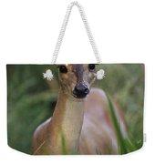 Marsh Deer Blastocerus Dichotomus Weekender Tote Bag