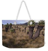Meadows And Groundsel Trees, Mt Weekender Tote Bag