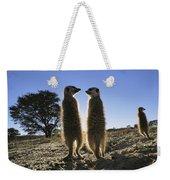 Meerkats Start Each Day With A Sunbath Weekender Tote Bag