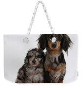 Merle Dachshund And Doxie Doddle Pup Weekender Tote Bag