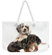 Merle Dachshund Pups Weekender Tote Bag