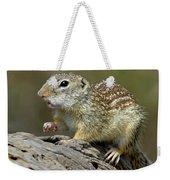 Mexican Ground Squirrel Weekender Tote Bag