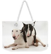 Miniature Bull Terrier Bitch, Lily Weekender Tote Bag by Mark Taylor