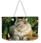 Mixed Breed Cat--mia Weekender Tote Bag