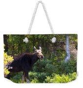 Moose Baxter State Park 4 Weekender Tote Bag