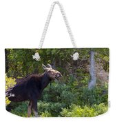 Moose Baxter State Park Maine 3 Weekender Tote Bag