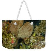Moray Eel, Belize Weekender Tote Bag