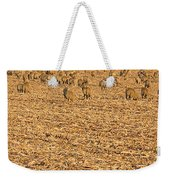 More Sheep To Count To Go To Sleep Weekender Tote Bag