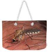 Mosquito Biting A Human Weekender Tote Bag