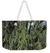 Moss Covered Trees Weekender Tote Bag