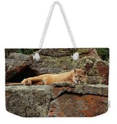 Mountain Lion Puma Concolor Lounging Weekender Tote Bag by Gerry Ellis
