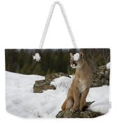 Mountain Lion Puma Concolor Sitting Weekender Tote Bag
