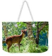 Muntjac Deer - Muntiacus Reevesi Weekender Tote Bag