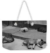 Napping Friends In Valparaiso Weekender Tote Bag